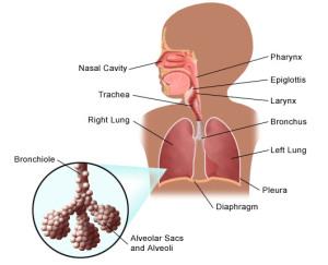Obat Bronkitis Anak